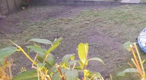 inktuition gruelling garden